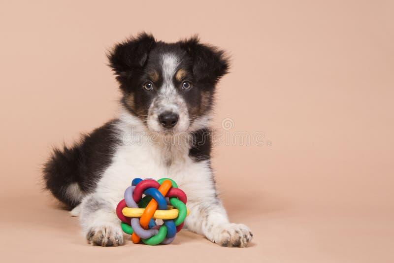 Colocación del perrito del border collie con un juguete imagenes de archivo