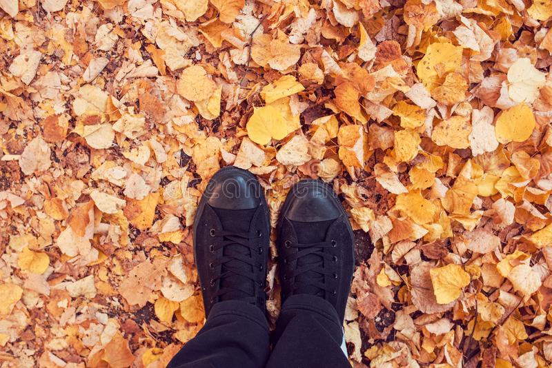 Colocación en la tierra cubierta con las hojas de otoño fotos de archivo libres de regalías