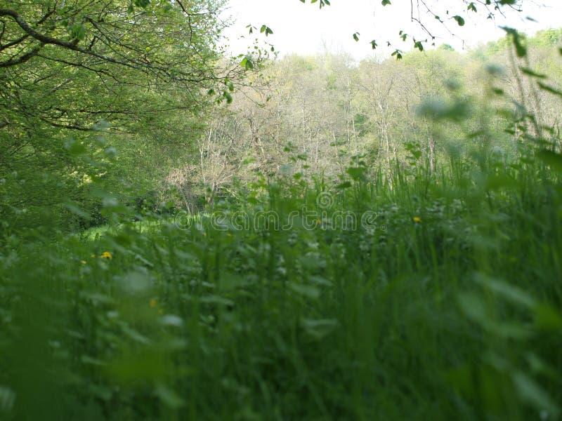 Colocación junto en los campos del verano fotos de archivo