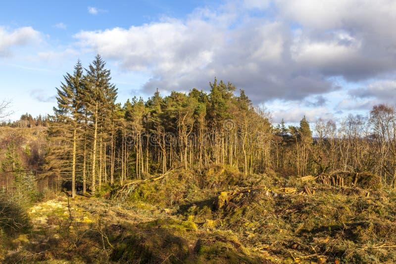 Colocación pasada de los árboles imagen de archivo