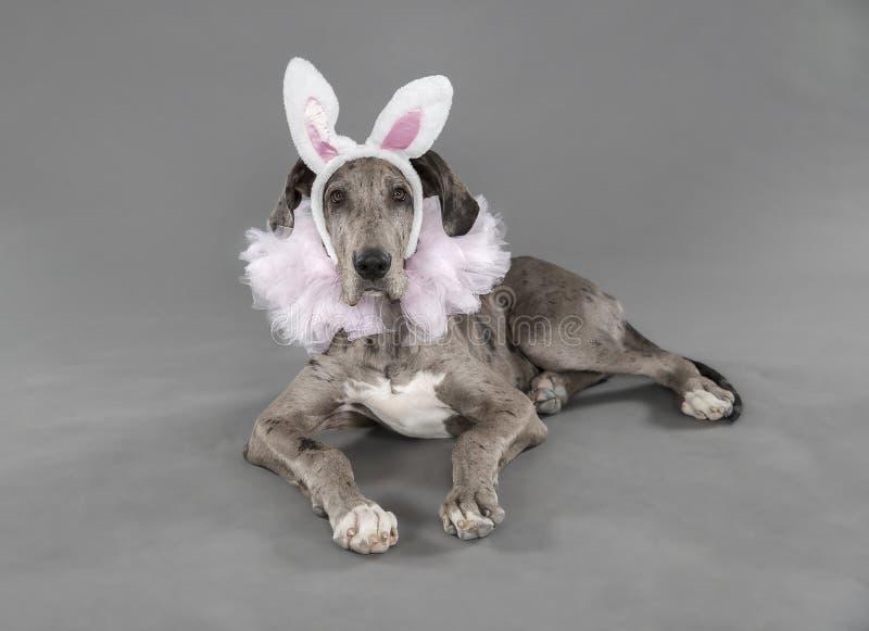 Colocando o cachorrinho no traje da Páscoa da bailarina fotos de stock royalty free