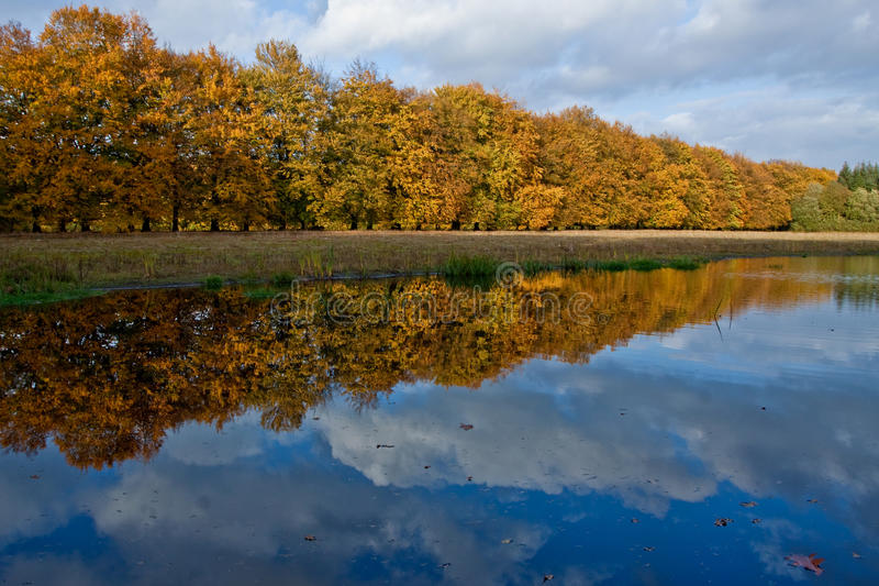 Coloful Herbstbäume in einem Wald lizenzfreie stockfotografie