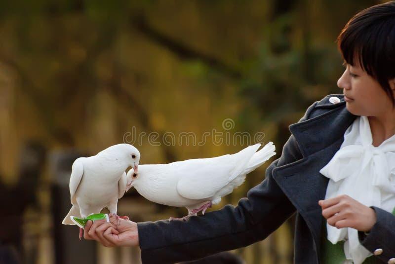 Colomba e ragazza pure di bianco fotografie stock libere da diritti