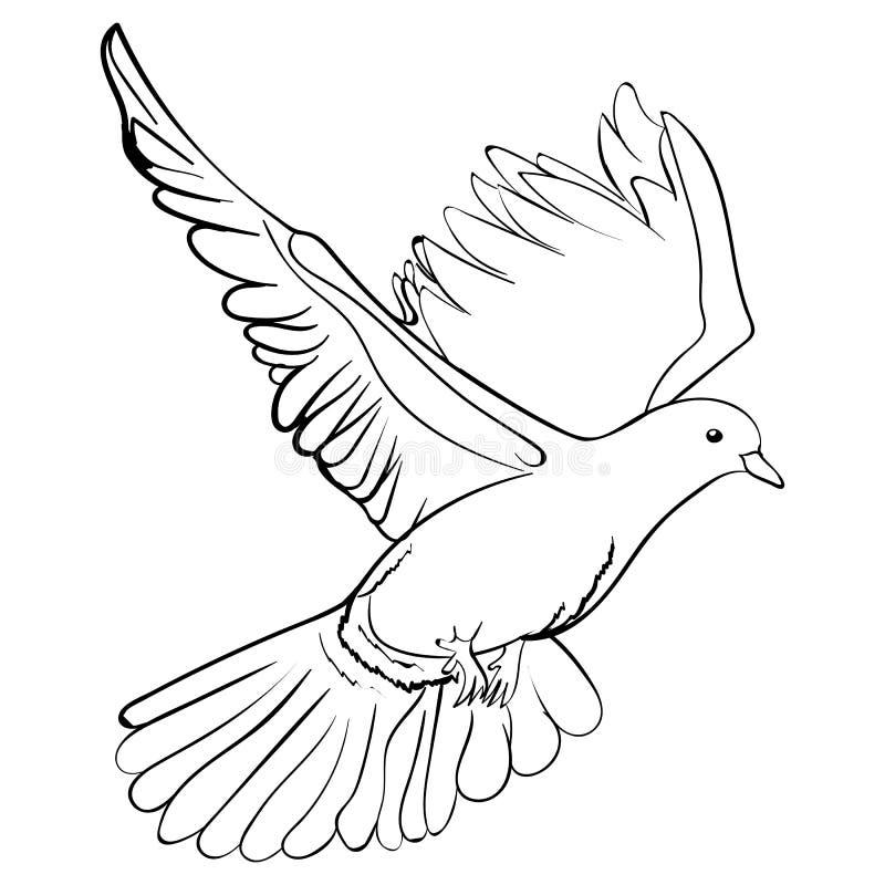 Colombe blanche de vol gratuit, illustration de vecteur de croquis illustration libre de droits