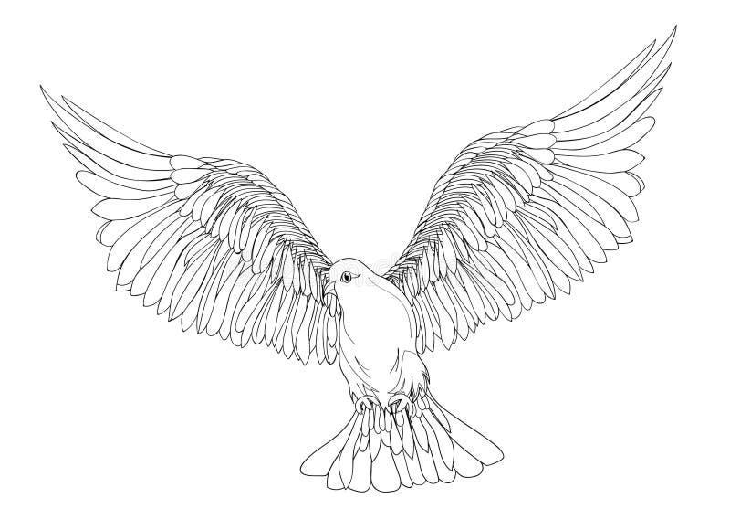 Colombe dans le vol gratuit Vecteur d'isolement sur le fond blanc illustration stock