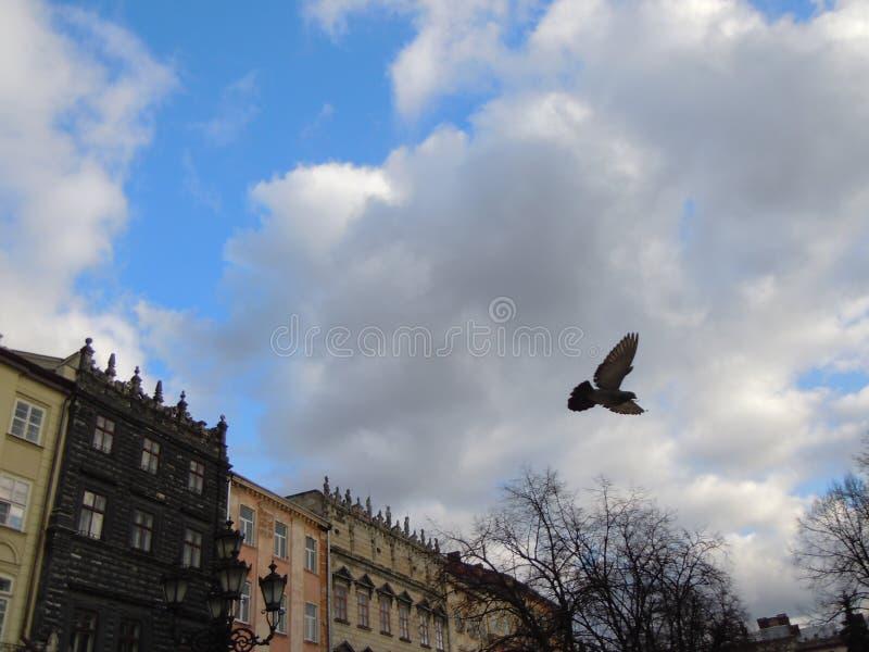 Colombe volante photographie stock libre de droits