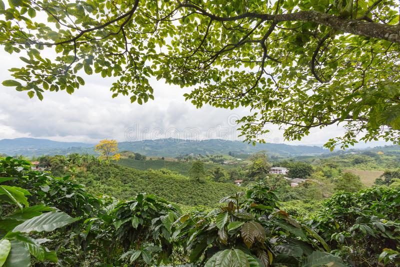 Colombia coffee royalty free stock photography