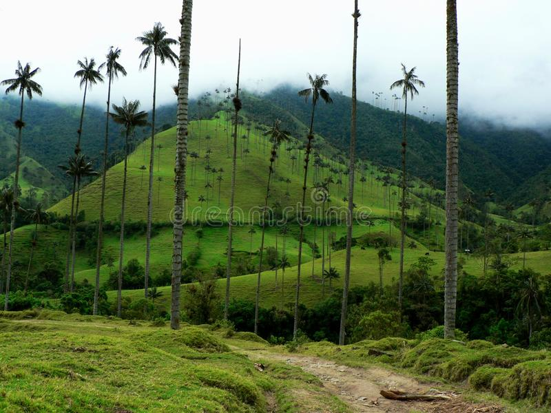 colombia gömma i handflatan salentotreeswaxen arkivbild