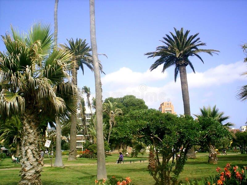 colombia plaza obrazy royalty free