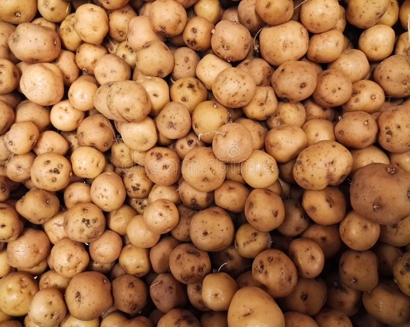 Colombian potatoes papa criolla, Solanum phureja produce in a market stock image