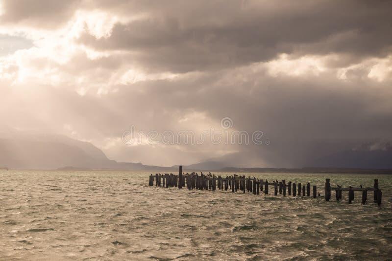 Colonia de rey Cormorant, muelle viejo, Puerto Natales, Patag antártico fotografía de archivo