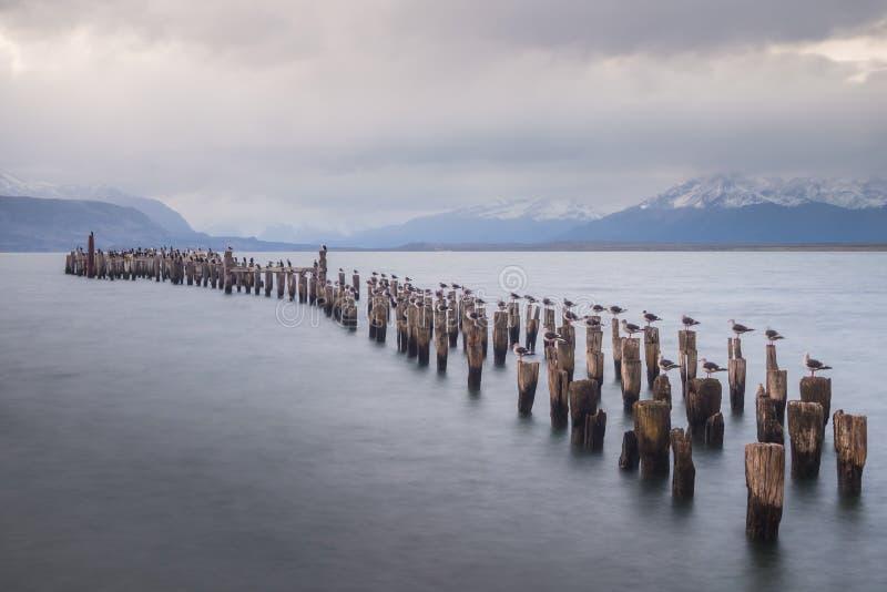 Colonia de rey Cormorant, muelle viejo, Puerto Natales, Patag antártico fotos de archivo