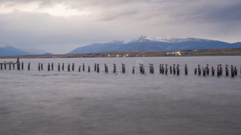 Colonia de rey Cormorant, muelle viejo, Puerto Natales, Patag antártico fotos de archivo libres de regalías