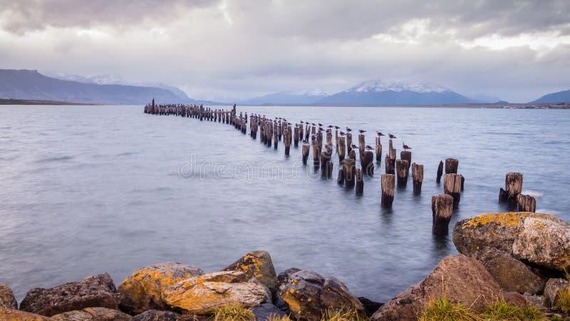 Colonia de rey Cormorant, muelle viejo, Puerto Natales, Patagonia antártica, Chile Puesta del sol fotos de archivo