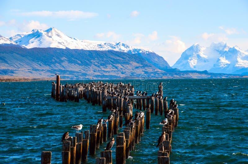 Colonia de rey Cormorant, Puerto Natales, Chile fotos de archivo libres de regalías