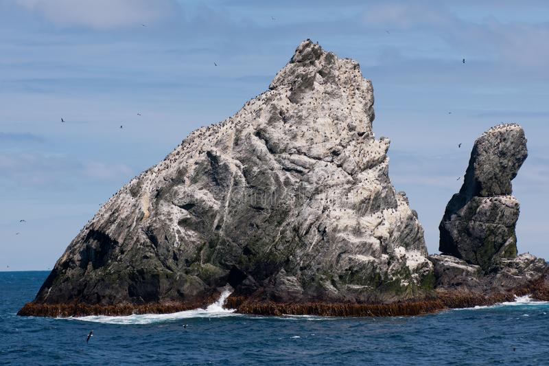 Colonia dei cormorani su roccia in mare antartico fotografia stock
