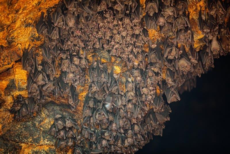 Colonia dei pipistrelli al tempio della caverna del pipistrello di Goa Lawah in Bali immagini stock