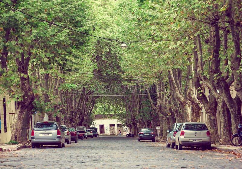 COLONIA DEL SACRAMENTO, URUGUAY - MAJ 04, 2016: den trevliga gatan med några stora träd på trottoarerna och någon parkerar parker royaltyfri fotografi