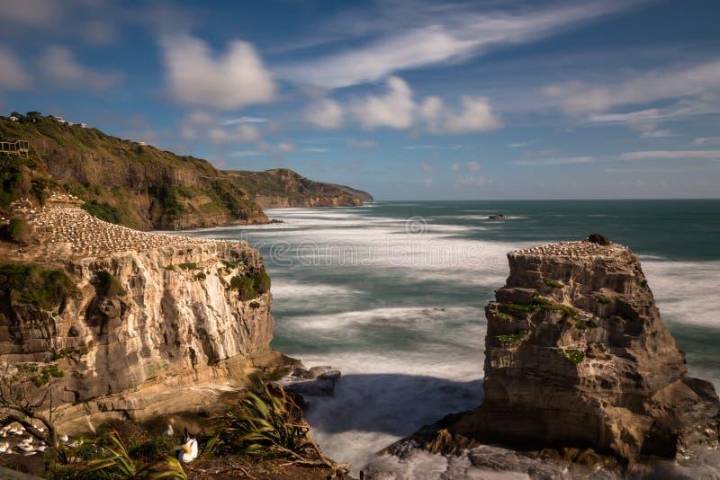 Colonia en las rocas sobre la playa de Muriwai en la costa oeste de Nueva Zelanda, exposición larga de Gannett para allanar el ag imagen de archivo libre de regalías