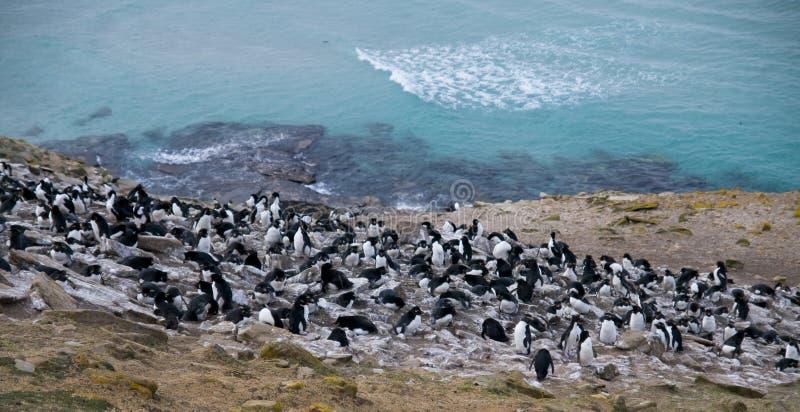 Colonie de pingouin de Rockhopper - les Malouines photo stock