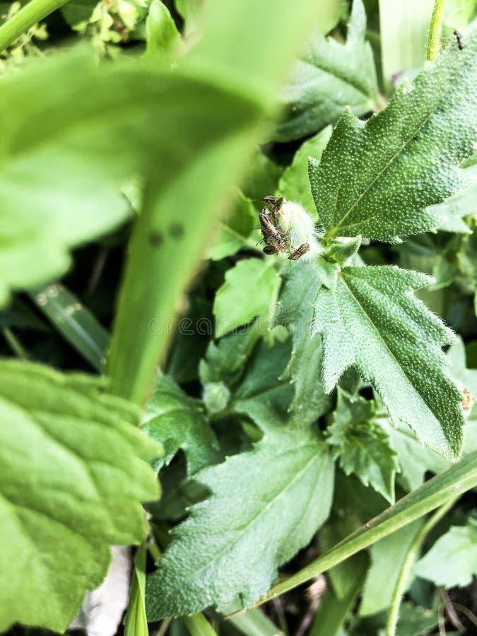 Colonie de scarabée de beauté photo stock