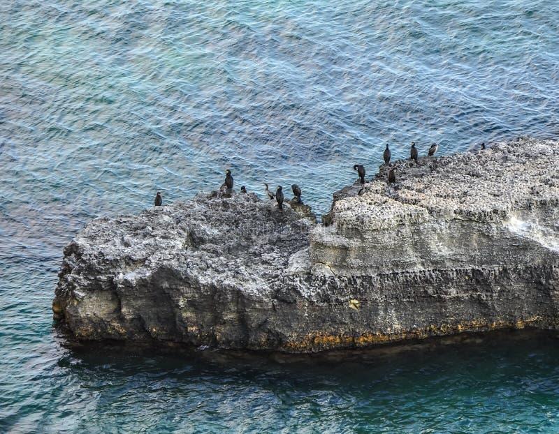 Colonie des cormorans sur les roches photographie stock libre de droits