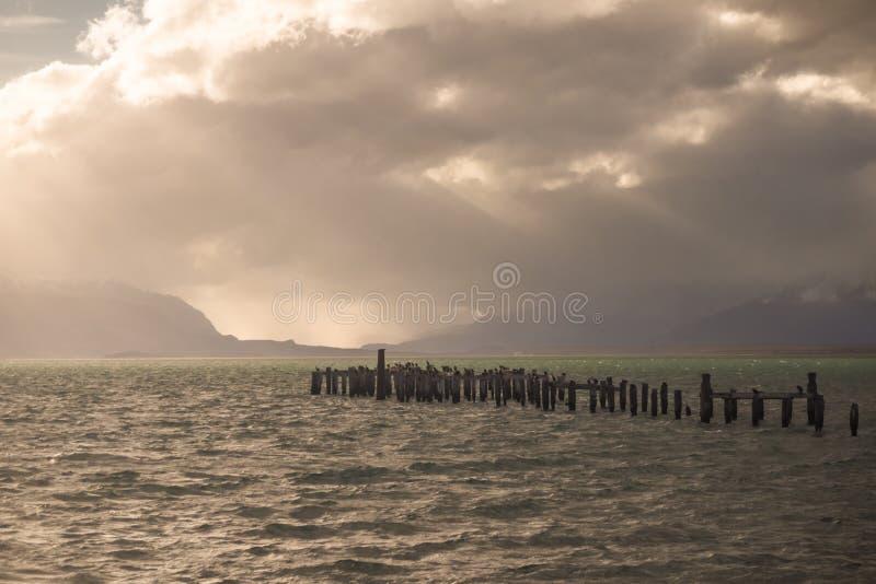 Colonie du Roi Cormorant, vieux dock, Puerto Natales, Patag antarctique photographie stock