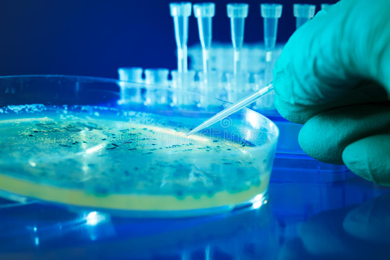 Colonies bactériennes photographie stock libre de droits