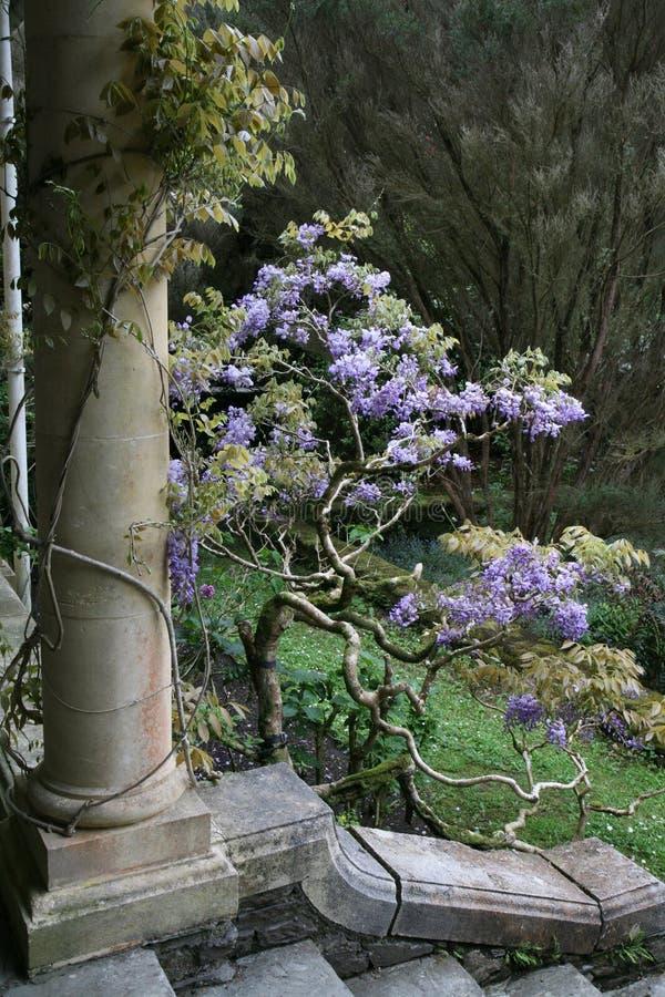 Colonna con i fiori immagini stock