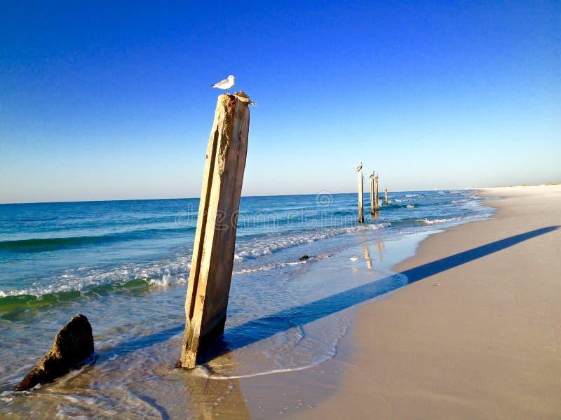 Colonne dispari su una spiaggia, con gli uccelli che si siedono su loro immagini stock
