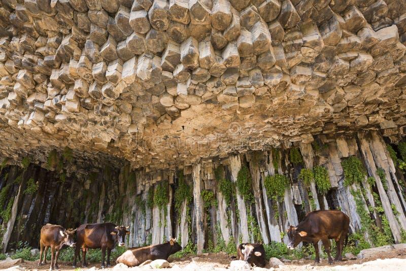 Colonnes de basalte connues sous le nom de symphonie des pierres, dans la vallée de Garni, l'Arménie photos libres de droits