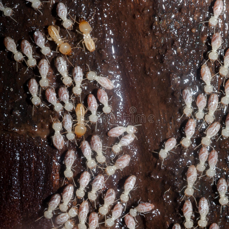 colony of termites stock photos