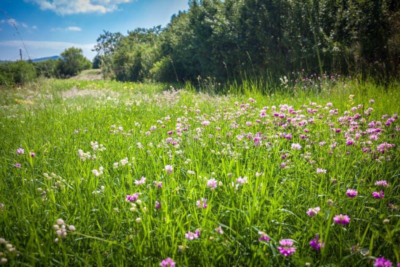 Coloque com lotes das flores cercadas por árvores fotografia de stock royalty free
