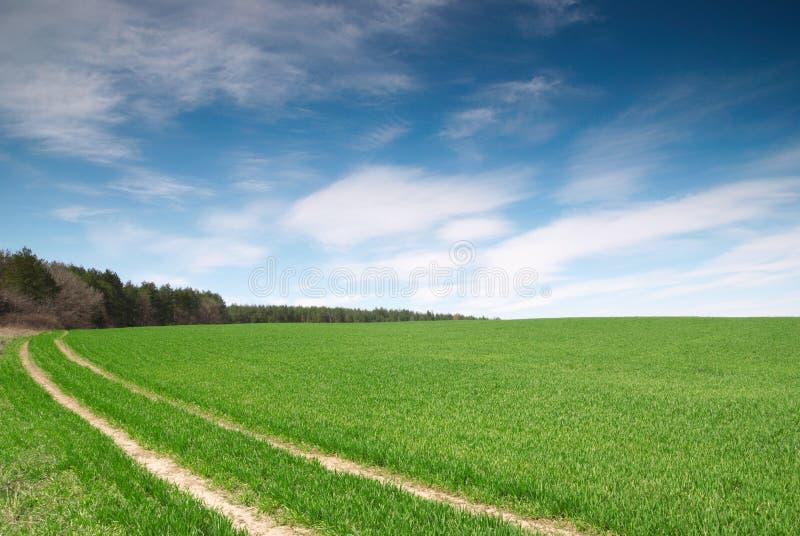 Coloque com trigo verde e o céu azul com floresta e estrada de terra fotografia de stock