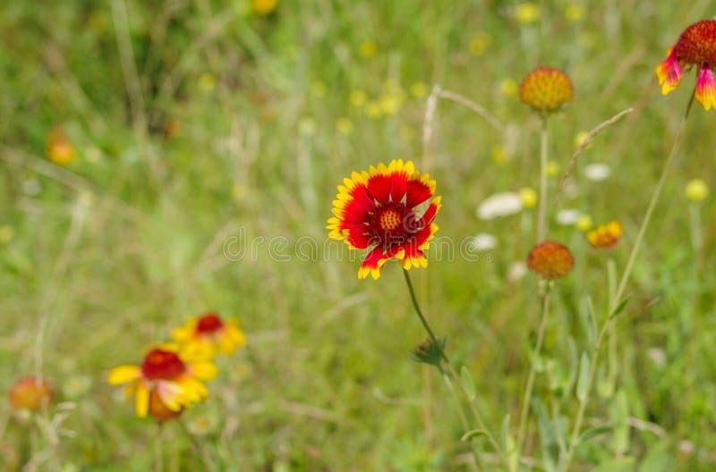 Coloque con las flores combinadas indias hermosas en la estación de verano fotos de archivo libres de regalías