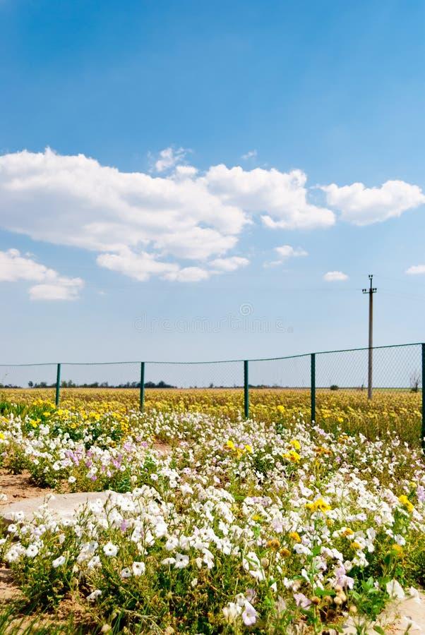 Coloque con las flores, la malla de la cerca, el cielo azul y las nubes fotos de archivo