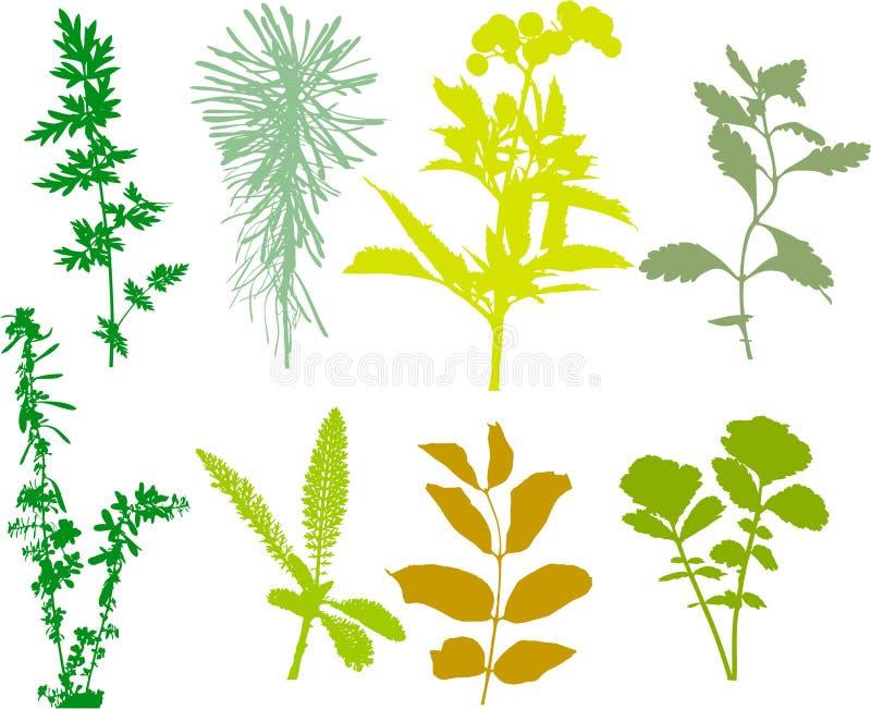 Coloque plantas, ervas, folhas - vetor, seguido ilustração stock