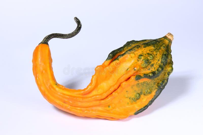 Coloquinte, κολοκύνθη, cucurbitaceae, κολοκύθα, στο άσπρο υπόβαθρο στοκ εικόνες με δικαίωμα ελεύθερης χρήσης