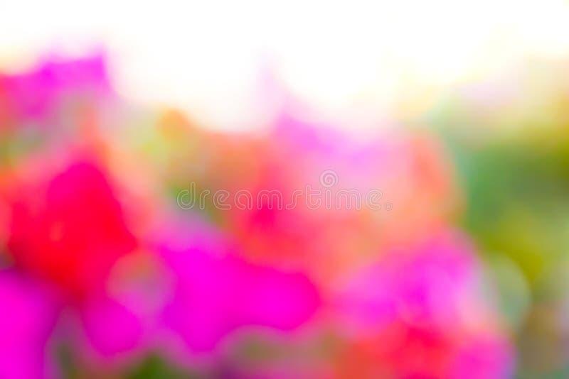 Coloré brouillé de la fleur, fond coloré de Bokeh photographie stock libre de droits