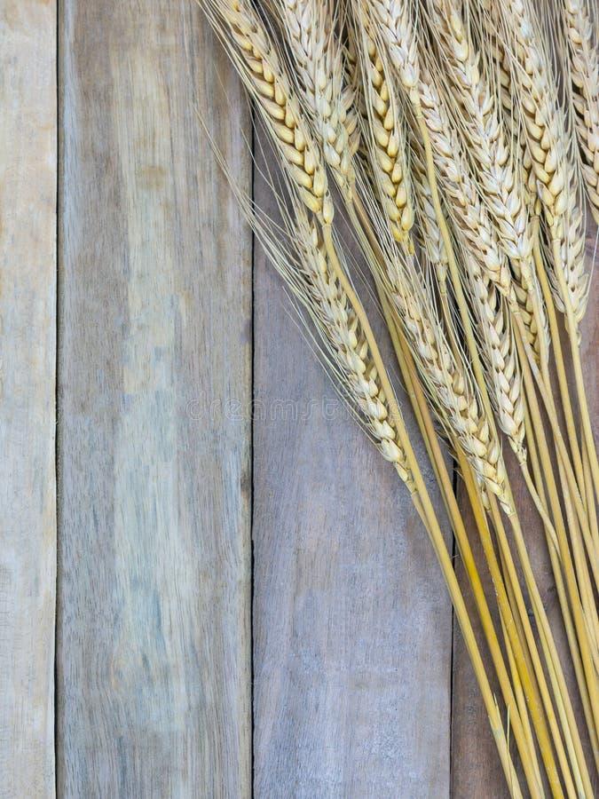 Coloré du blé ou du riz non-décortiqué sur le fond en bois images libres de droits