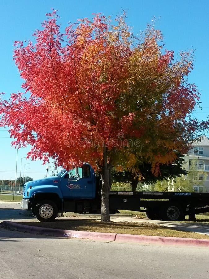 Coloréeme los árboles de la caída foto de archivo