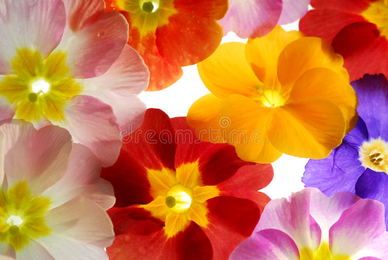 Color stock images