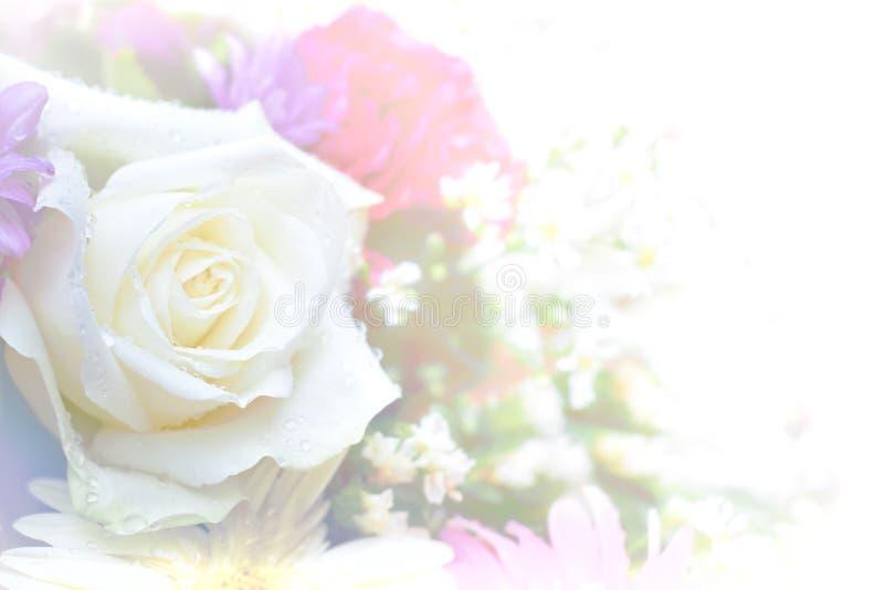 Color abstracto de la flor de Rose alto y suave dominante imagen de archivo libre de regalías