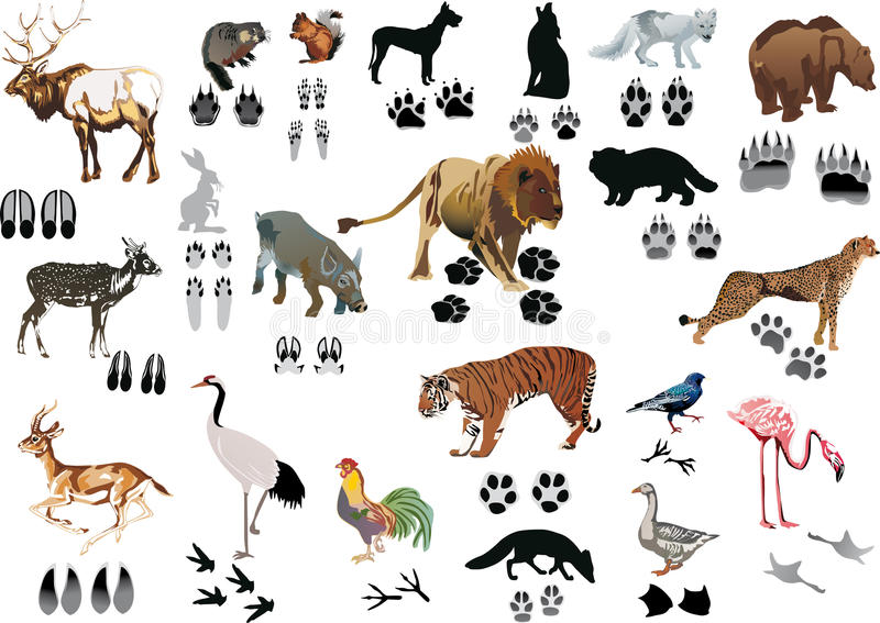Color animals and tracks royalty free illustration
