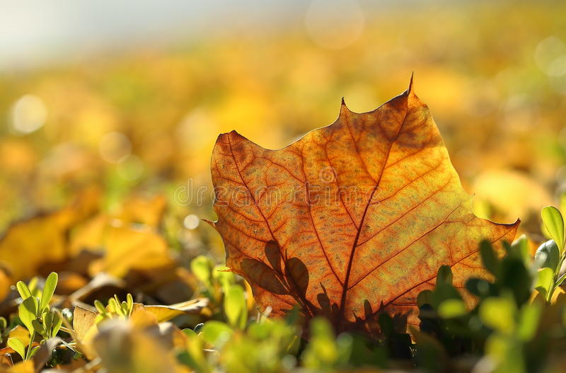The color of autum. Autum leafs on the ground royalty free stock photo