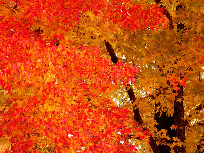 Color of Autumn stock photo