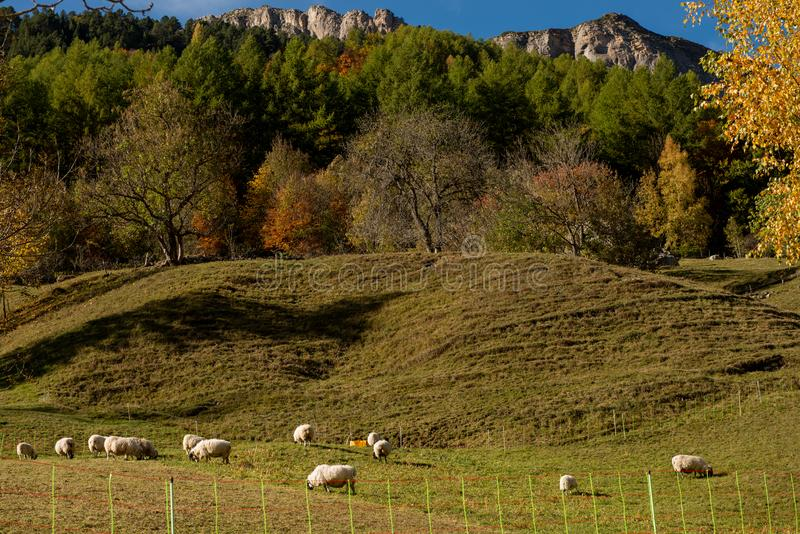 Color of autumn at the mountain french Pyrenees royalty free stock image