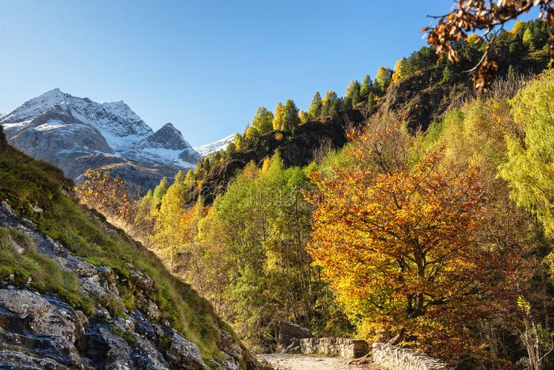 Color of autumn at the mountain french Pyrenees stock images