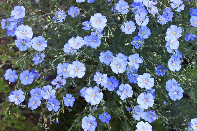 Color azul fotografía de archivo