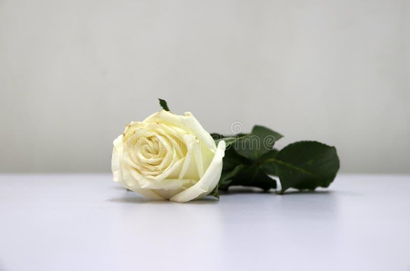 Color Blanco De La Hoja Color De Rosa Y Verde En El Piso Blanco ...